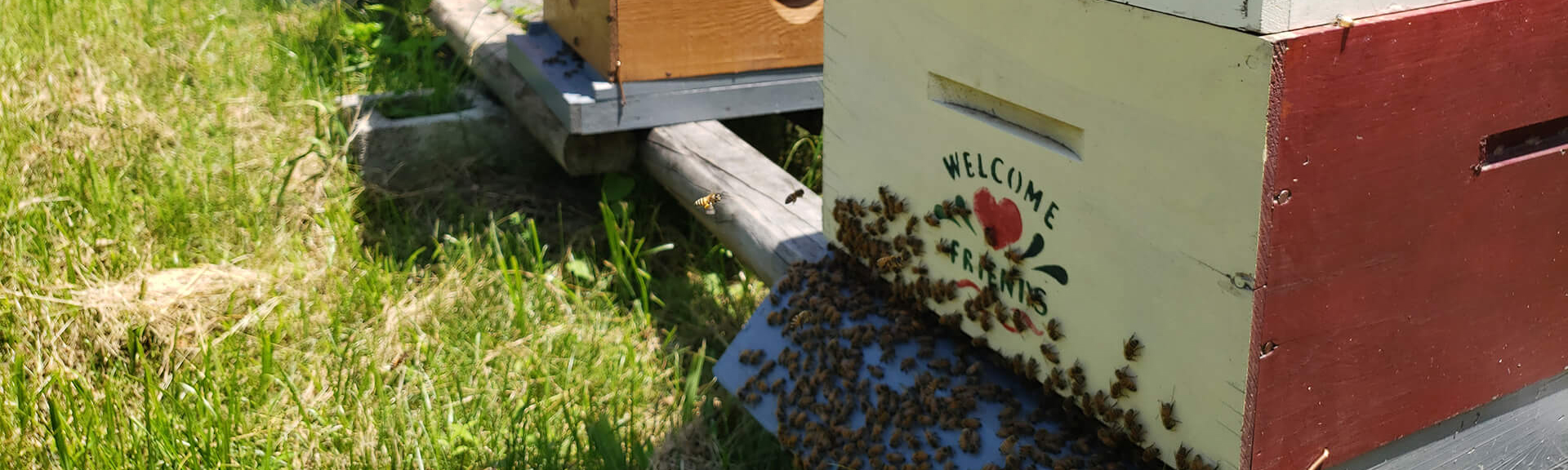 "Apiary with honey bees with ""Welcome Friends"" painted on"