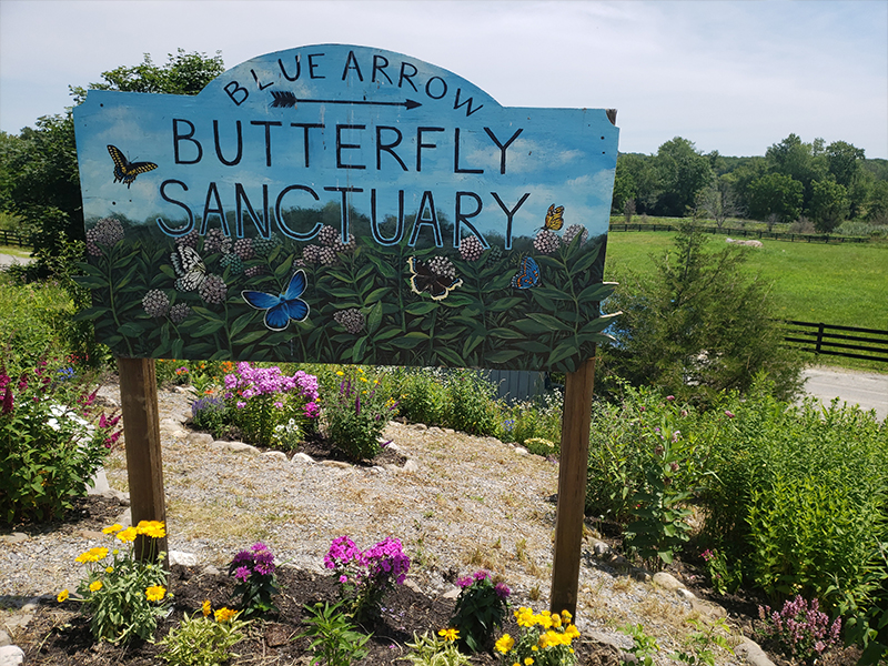 Painted sign for Blue Arrow butterfly sanctuary
