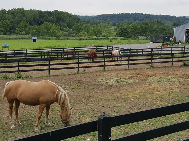 Wide view of Blue Arrow Farm with horses at pasture